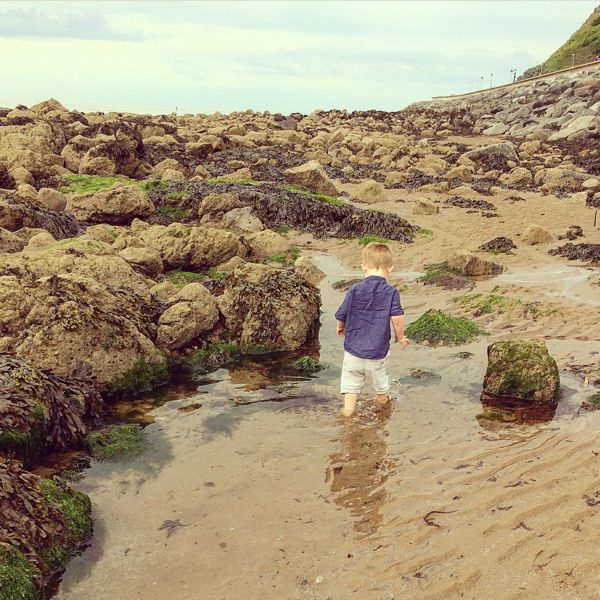 Rock pooling : What to take and learning resources via Toby & Roo :: daily inspiration for stylish parents and their kids.
