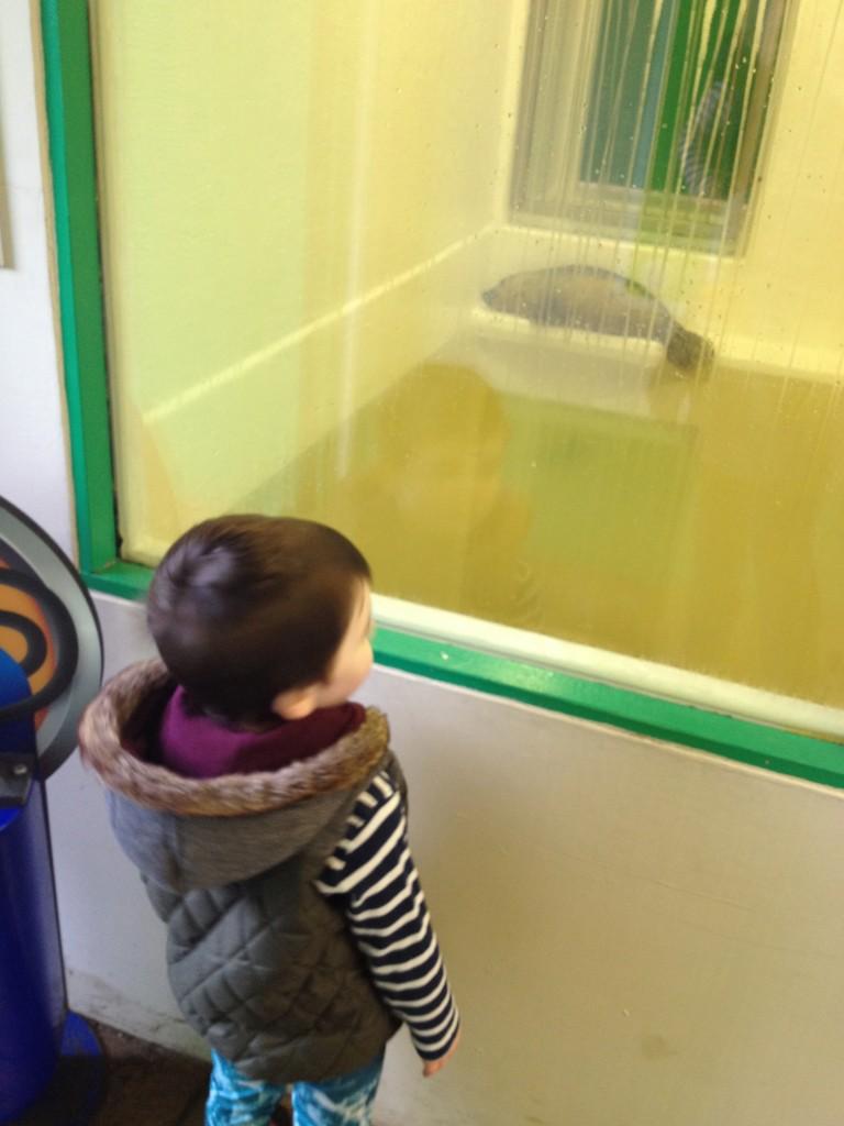 Seal hospital was Reuben's favourite part!