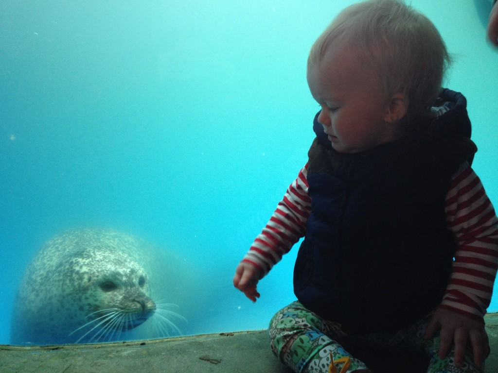 One seal in particular took an interest in Toby and was 'smiling' at him!