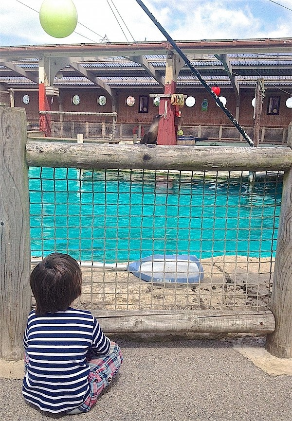Zoo visit via Toby & Roo :: daily inspirations for parents and their kids.